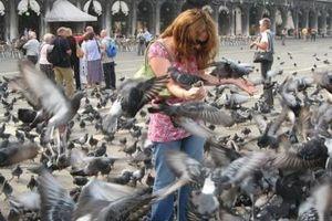 Du lịch Venice - Italy: Những cấm đoán lạ lùng