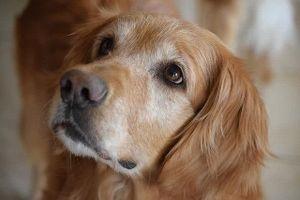 Top những giống chó thân thiện nhất thế giới