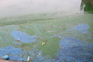 Hồ Văn Quán đang ô nhiễm nghiêm trọng