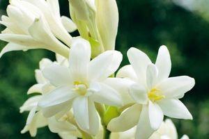 6 loại hoa dùng để cúng ngày lễ Vu lan