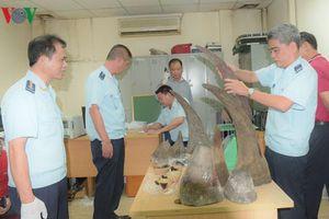 Chữa sốt co giật bằng bột sừng tê giác, bé 22 tháng tuổi bị ngộ độc
