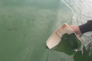 Nước hồ Dầu Tiếng xanh đậm đặc bất thường