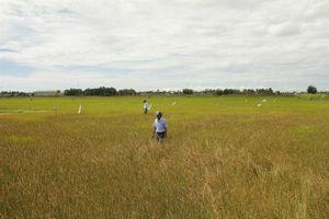 Quảng Nam, Đà Nẵng: Trên 15.000 ha cây trồng nguy cơ khô hạn