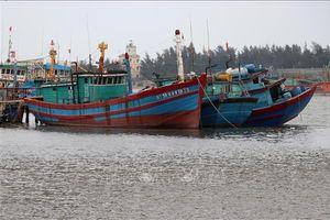 Phát triển kinh tế biển Trung Trung bộ - Bài 1: Thúc đẩy khai thác hải sản xa bờ