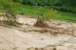 Cứu người đàn ông mắc kẹt trên cây giữa dòng nước lũ