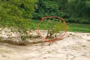 Lũ quét tại Thanh Hóa, 1 người mắc kẹt giữa dòng nước lũ