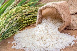 Gạo hữu cơ Quảng Trị quý như vàng nhờ có hợp chất chống tiểu đường, bệnh gút