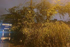 Quảng Ninh: Nước sông Ka Long dâng cao, cây cối ngổn ngang sau đêm bão số 3 đổ bộ