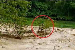 Người đàn ông đu ngọn cây thoát chết giữa cuồn cuộn nước lũ