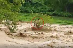 Cứu nạn nhân cheo leo trên cây giữa dòng lũ dữ, người giải cứu lại bị mắc kẹt ở Thanh Hóa