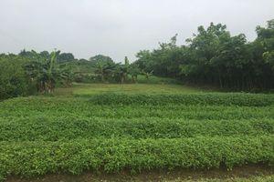 Lừa bán dự án 'ma' Việt-Inc, nhiều câu hỏi còn bỏ ngỏ