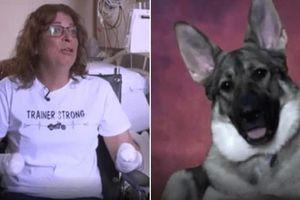 Bị chó cưng liếm 'yêu', bà chủ phải nhập viện cắt cụt hết tay chân để cứu mạng