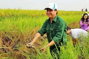 Nông dân có thể lãi 40 triệu đồng/ha từ loại gạo có hợp chất quý này