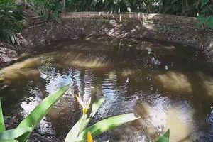 Kì lạ, 'ao nước sôi' gần trăm tuổi ở Vĩnh Long
