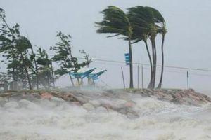 Australia: Hệ sinh thái biển ảnh hưởng nghiêm trọng vì thời tiết