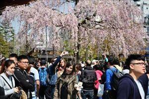 Du khách Hàn Quốc tới Nhật Bản bất ngờ giảm mạnh