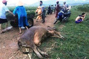 Nghệ An: Trên đường đi làm đồng về, một người bị sét đánh tử vong