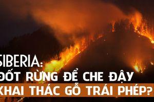 Cháy rừng khủng khiếp tại Siberia là để che giấu phá rừng?
