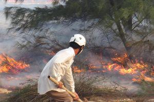 Vì sao bảo vệ rừng ở Quảng Bình bỏ việc hàng loạt?