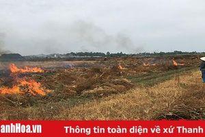 Lạm dụng thuốc 'cỏ cháy' - lợi bất cập hại