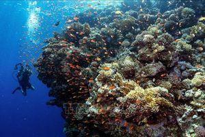 Nhiệt độ nước cao là một trong những yếu tố hủy hoại các dải san hô