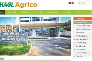 Sắp có một HAGL Agrico rất khác và chủ khác?