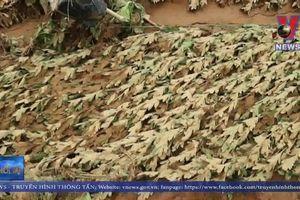 Lâm Đồng: Vùng sản xuất nông nghiệp cao tan hoang sau lũ dữ