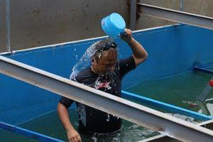 Chuyên gia Nhật Bản tắm, ngụp lặn ở sông Tô Lịch