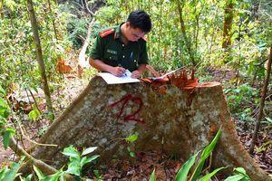 Vụ phá rừng đầu nguồn Sông Ví (H. Bắc Trà My, Quảng Nam): Vận động nhân dân tố giác đối tượng vi phạm để điều tra, xử lý