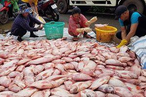 600 tấn cá bè trên sông Đồng Nai bị lũ cuốn trôi