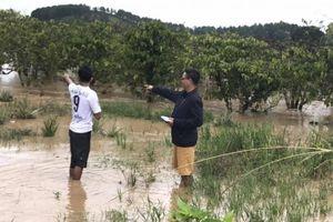 Mưa lũ cuốn trôi hàng trăm tỷ đồng của nông dân Lâm Đồng