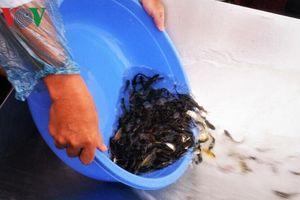 Thả gần 15 tấn cá về thiên nhiên để tái tạo nguồn thủy sản