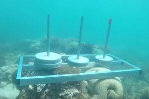 Ê-kíp Cuộc đua kỳ thú bị chỉ trích vì đặt bê tông lên rạn san hô