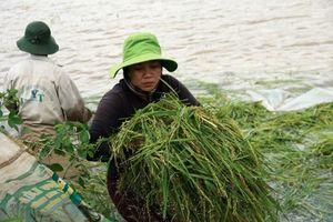 Đắk Lắk: Nước tràn đê bao, nguy cơ mất trắng hơn 1.000 ha lúa