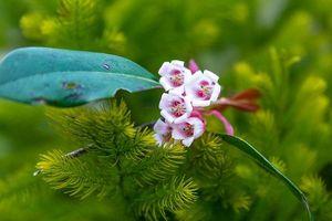Bạch Mã mùa hoa khoe sắc