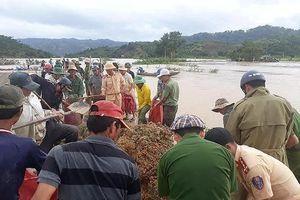 Đắk Lắk: Nước tràn đê bao, người dân 'bấm bụng' cắt lúa non chạy lũ
