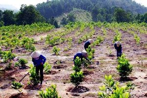 Hà Nội yêu cầu phải trồng rừng kịp thời theo đúng quy hoạch
