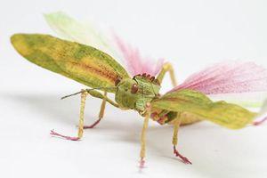 Xem đi xem lại vẫn kinh ngạc với loạt côn trùng... bằng giấy