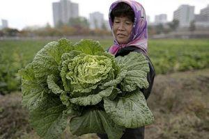 Ngỡ ngàng cuộc sống bình dị ở nông thôn Triều Tiên