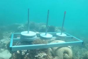 Bị chỉ trích phá hoại môi trường biển, ban tổ chức 'Cuộc đua kỳ thú' lên tiếng