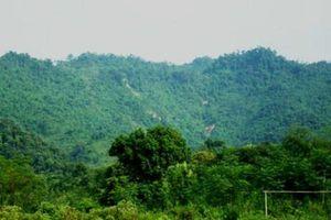 Hà Nội lên phương án quản lý đất lâm nghiệp bền vững
