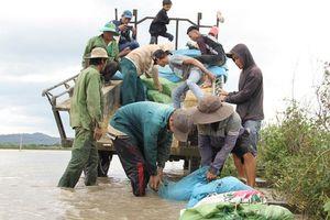 Nước tràn qua đê bao, hàng trăm người dân căng mình cứu lúa