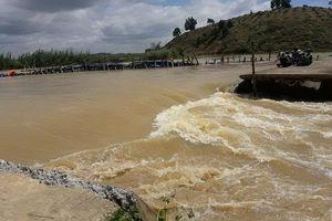 Vỡ đê bao Quảng Điền, hơn nghìn ha lúa tại Đắk Lắk chìm trong nước lũ
