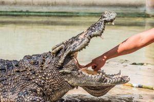 Người đàn ông cạy mồm cá sấu, cứu chó cưng thoát chết cận kề