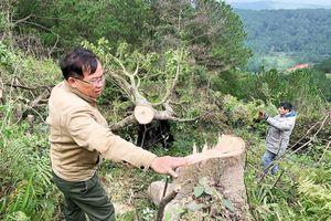 Bắt quả tang 11 đối tượng ngang nhiên chặt hạ cây rừng giữa ban ngày