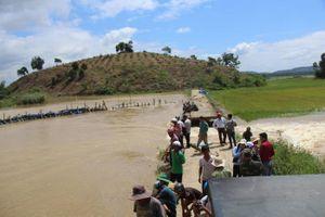 Đắk Lắk: Vỡ đê bao nước tràn vào đe dọa hơn 1.000ha lúa sắp thu hoạch