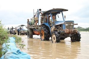 Vỡ đê bao Quảng Điền, hàng trăm người dân lại trầm mình cứu lúa