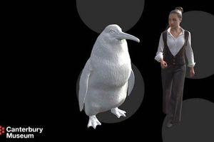 Khoảng 56 triệu năm trước, chim cánh cụt đã từng có kích thước bằng một người trưởng thành