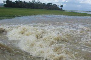 Đắk Lắk: Đê hơn 300 tỷ vỡ, người dân xót xa nhìn ruộng lúa chìm trong biển nước