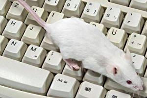 Dùng chuột để phát hiện sự bất thường trong lời nói
